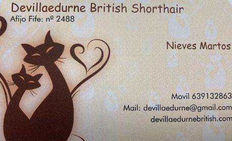 De Villa Edurne British Shorthair